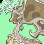 Skull by RTaylor