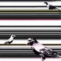 Crows by Paradorf
