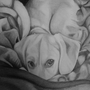 Porthos The Puppy by Aludra