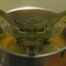 Gremlin Stew: The New Broth