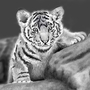 Baby Tiger Final by borgmajr
