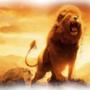 Lion_Art by NoviusJ