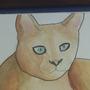 Leavers Cat by Aleaf01