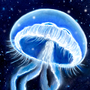Jellyfish by kacenace