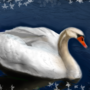 the swan by Anisjerbi22122002