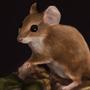 A little mouse ornament