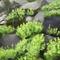 Wild succulents- landscape studies
