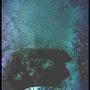 vii Blacktip Siren by seVIIn