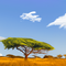 savannah landscape