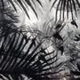 Florida Foliage in Ink