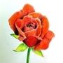 rose by kacenace