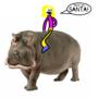 I want a hippopotamus for Christmas.