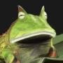 Dry Frog by polhudo