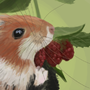 Hamster Study