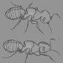 Ant character design