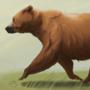 Bear trotting