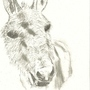 Donkey! by wrighton5