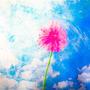 Bloom at Noon