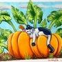 A cat named pumpkin