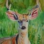 Mule Deer by Kilsley