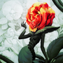 Alice in Wonderland - Rose