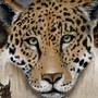 Leopard by Tapersteve
