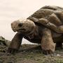Tore The Tortoise