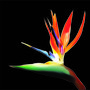 Simple Flower by Geadaan