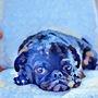 Blue Dog by Radiationburns