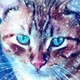 Snow Cat by Radiationburns