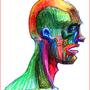 Anatomical Fun by Stoned-Gorilla