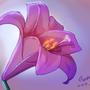 Valentines Lily
