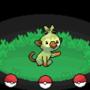 Gen 8 Starter Pokemon!