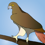 Red Tailed Eagal by rbrtpaine