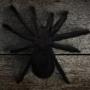 Spider Creature
