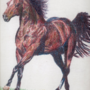 Horse in Colored Pencil (2003-ish)
