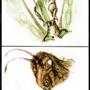 Bug Head Study