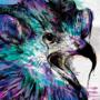 Falcon_Antelope