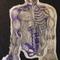 Anatomical Sketch 1
