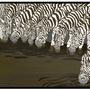 Zebras. by ToonHole