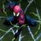 Spiderman in Mysterio's ilusion
