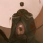 Bás, Sire of death