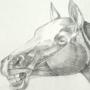 Horses study