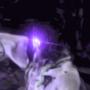 Awakened Sorcerer