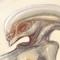 Alien Multi-Breast Hybrid